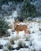 Winter In Colorad...