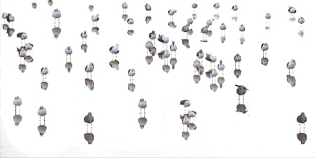 Abstract Gulls at low tide