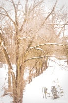 Winter Tree Original.jpg