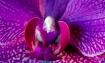 bird or flower?