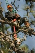 Tree Trimmer 2