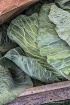 Textured Greens