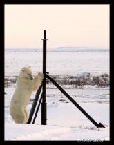 Pole Dance One