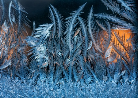 Frost Forest