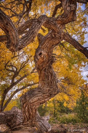 Tree Woman of Los Golondrinas