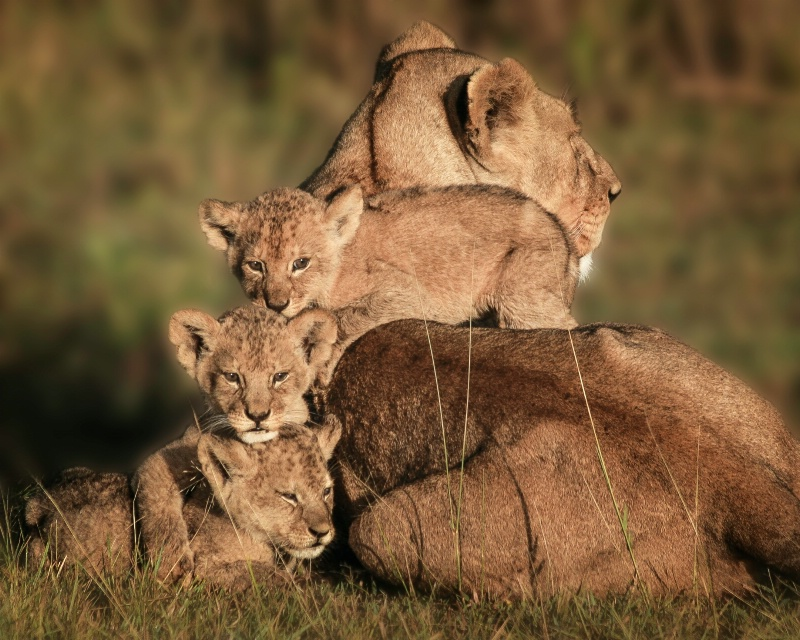 Close Family