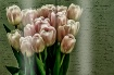 ~ Spring Edition ...