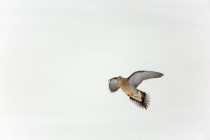 In Flight