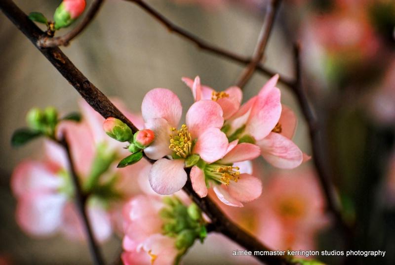 a blossom for jeana