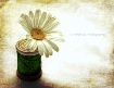 spool & daisy