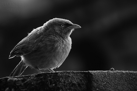 Backlit Birdy