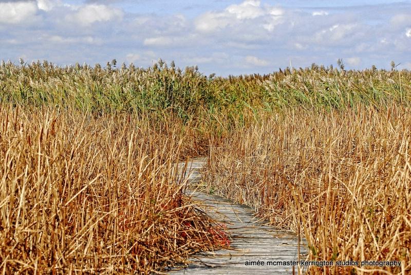 october marsh walk