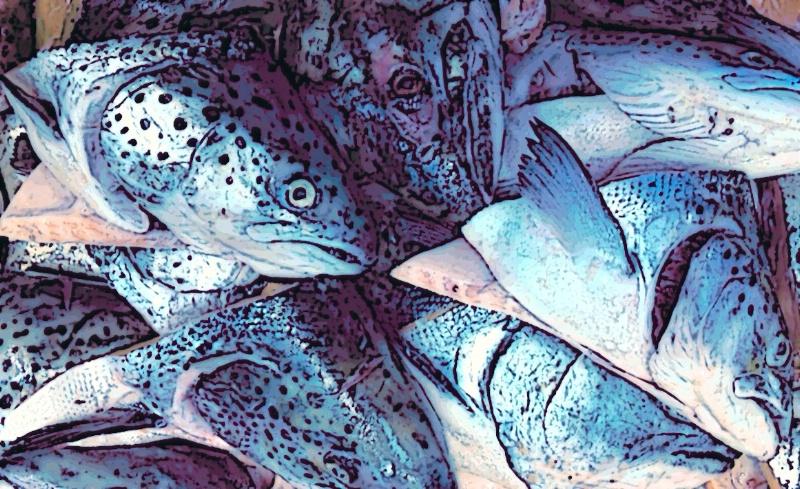 "Based on Jeff's ""Fish heads' image"