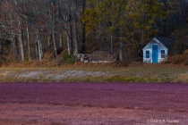 depth of field overall cottage on the bog
