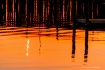pilings at sunset...