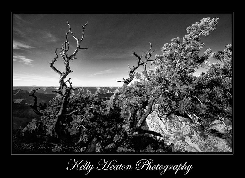 Grand Canyon North Rim Black and White