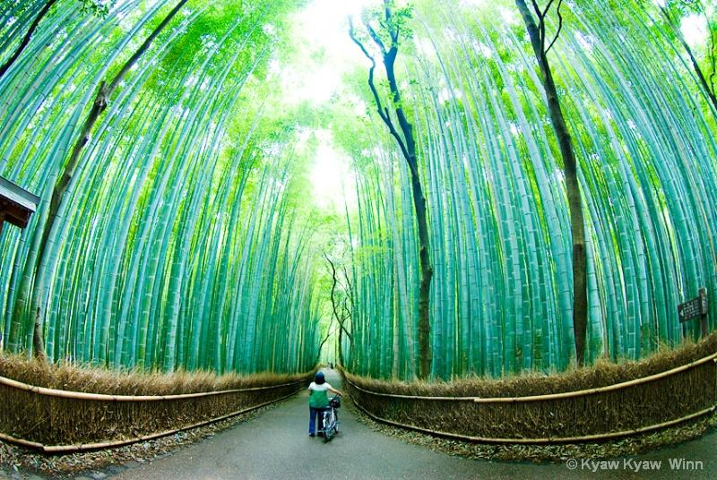 Bamboo Garden - ID: 14435297 © Kyaw Kyaw Winn