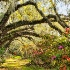 2Magnolia Gardens Oak Lane - ID: 14446199 © Carol Eade