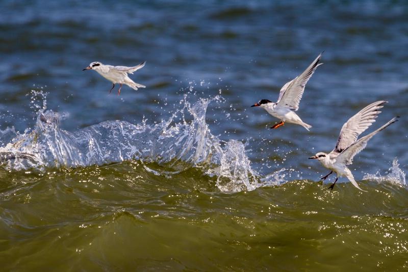 Wave Jumpers - ID: 14460227 © Karen Celella