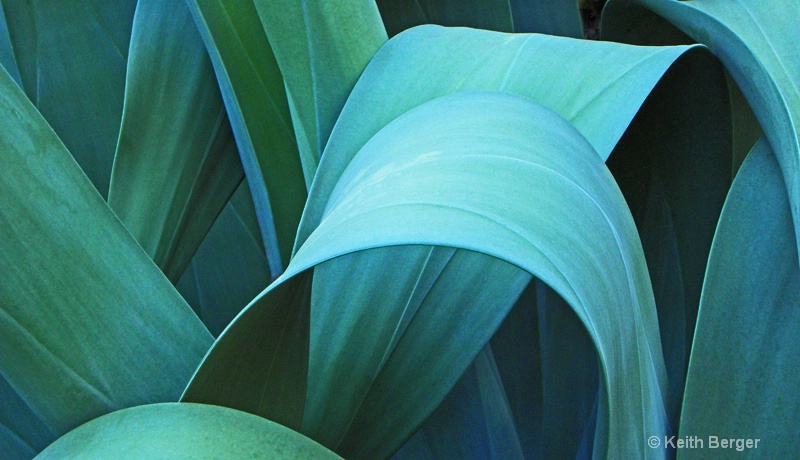 Agave #1 - ID: 14460903 © J. Keith Berger