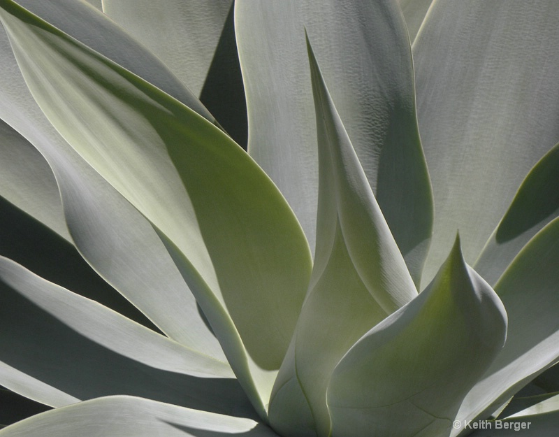 Agave #14 - ID: 14460908 © J. Keith Berger