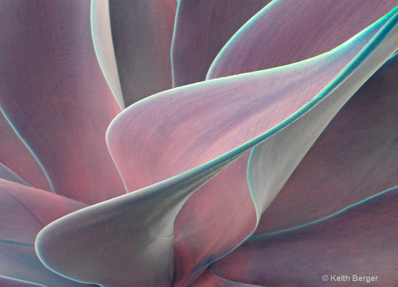 Agave #7 - ID: 14460937 © J. Keith Berger