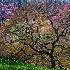 2Winterthur Garden, DE - ID: 14466640 © Fran  Bastress
