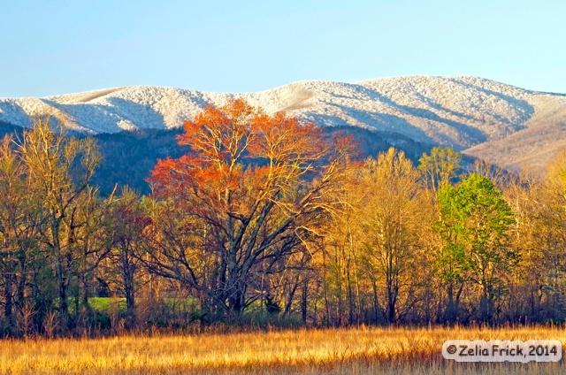 Seasons of Cades Cove, TN - ID: 14475236 © Zelia F. Frick