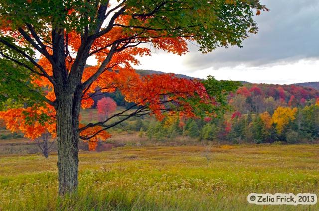 Window View of Red Maple - ID: 14475247 © Zelia F. Frick