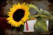 The Sunflower Boo...