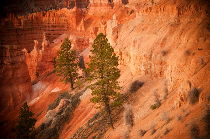 Sunrise View at Bryce Canyon