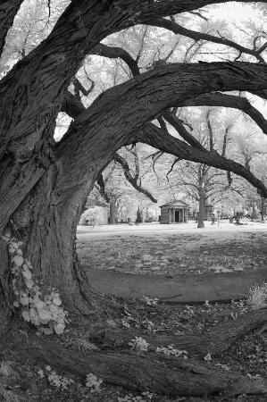 Katsura Tree and Mausoleum