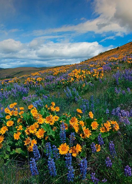Desert Colorful