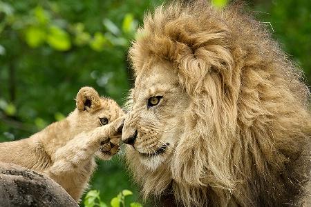 Daddy Loving