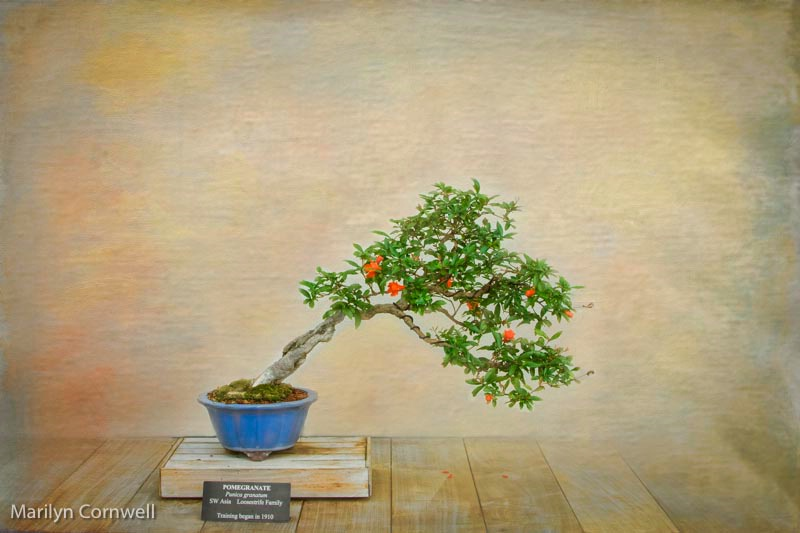 Bonsai Art - ID: 14504054 © Marilyn Cornwell