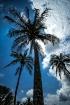 Looking Up, Bermu...
