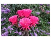 Steve's Flowers