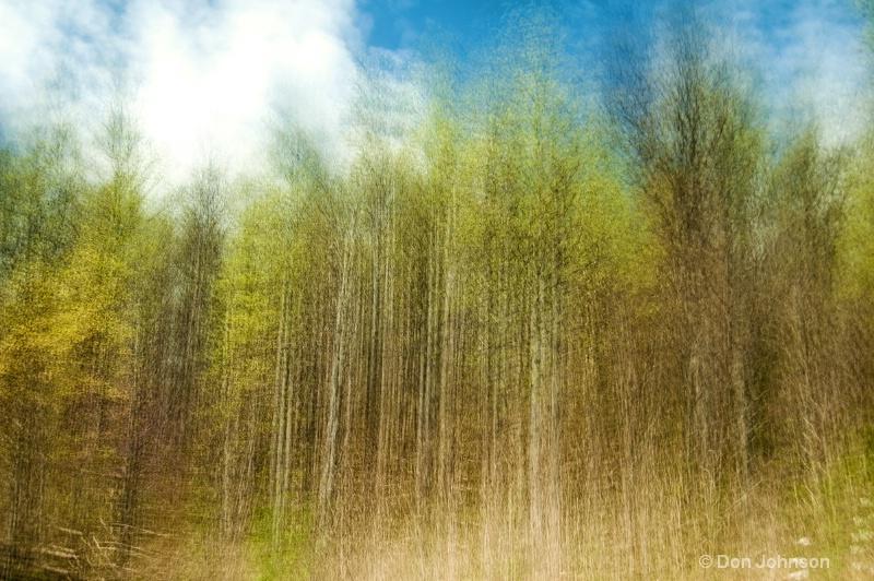 Spring Trees - ID: 14506400 © Don Johnson