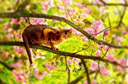 ~ ~ MY JAPANESE CAT ~ ~