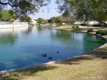 p1010030  Ducks Greenbelt Gilbert AZ