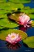 Flower Padding