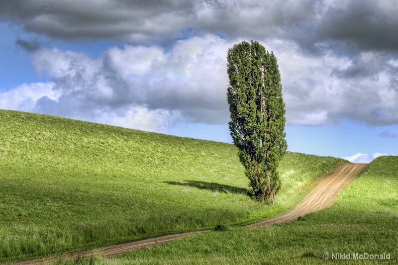 The Poplar