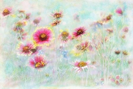 Wildflower Dreamin'