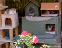 Outdoor back office cats