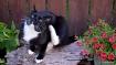 Little Black Kitt...