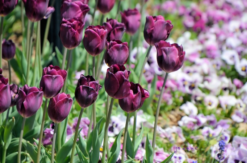 Shades of Purple..