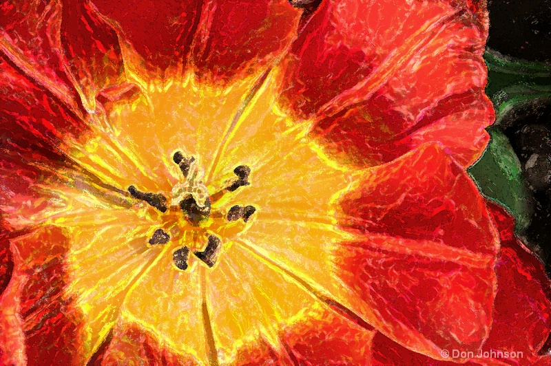 Artistic Red and Yellow Tulip - ID: 14544617 © Don Johnson