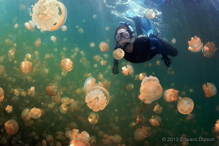 Snorkeler with Jellyfish - ID: 14544659 © Edward Dorson