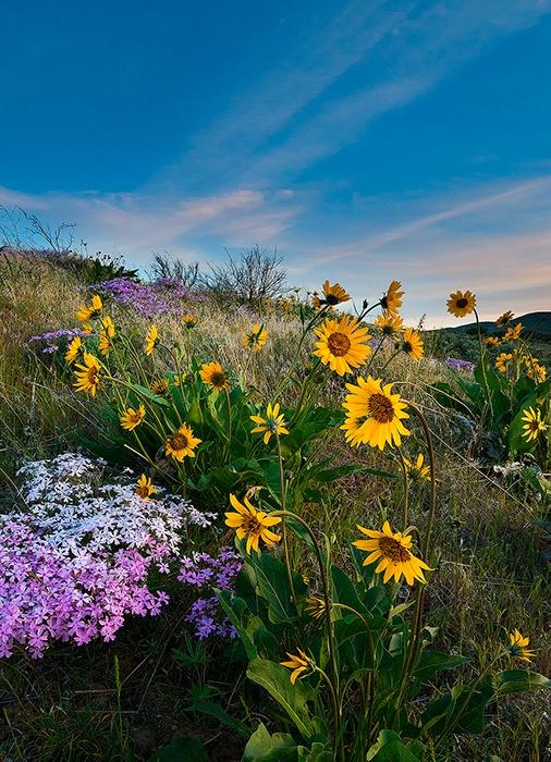 High Desert Spring