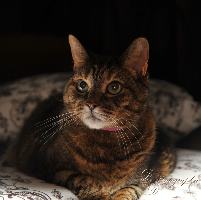 Our Tiger Cat